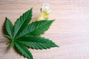 Las propiedades terapéuticas de esta planta podrían beneficiar a millones de pacientes en todo el mundo.