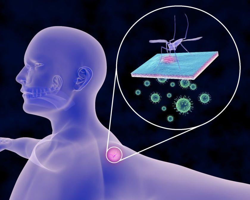 Infecciones transmitidas por mosquitos