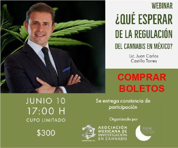 En qué momento está México y qué esperar sobre la regulación del cannabis