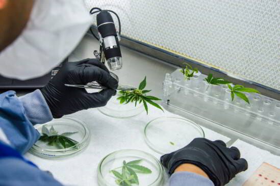 Laboratorio de Ikänik-Pideka en Colombia donde cultivan indoor cannabis grado farmacéutico.