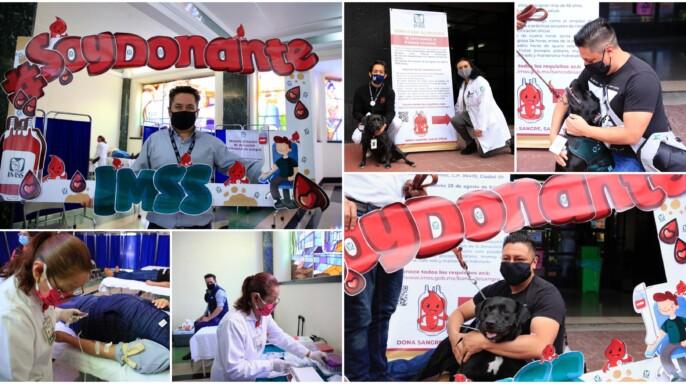 Mosaico de imágenes de donación de sangre