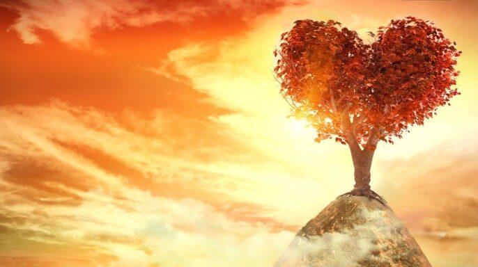Puesta de sol con árbol del corazón